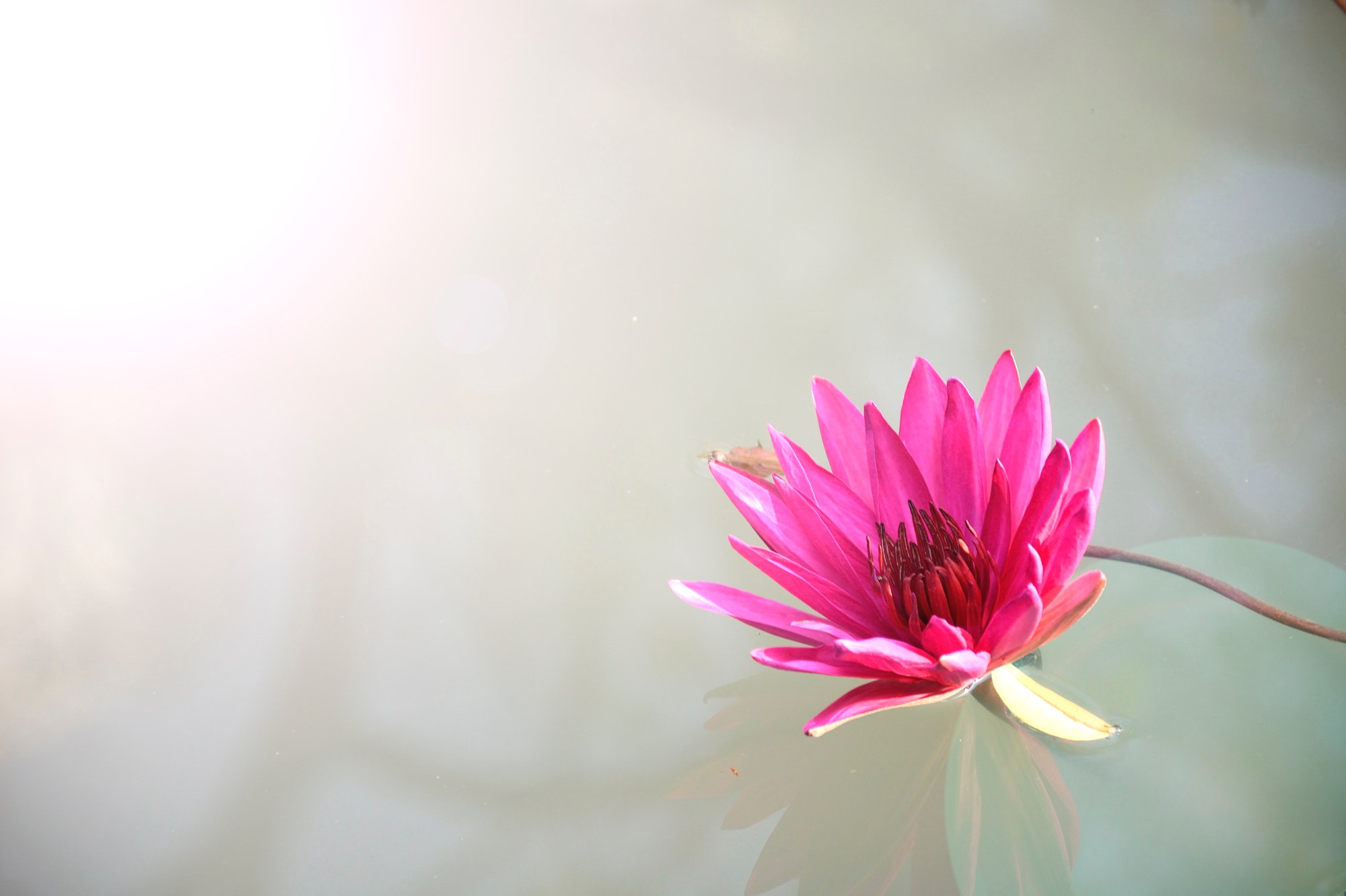 Second Inning z @ Lotus Bloom